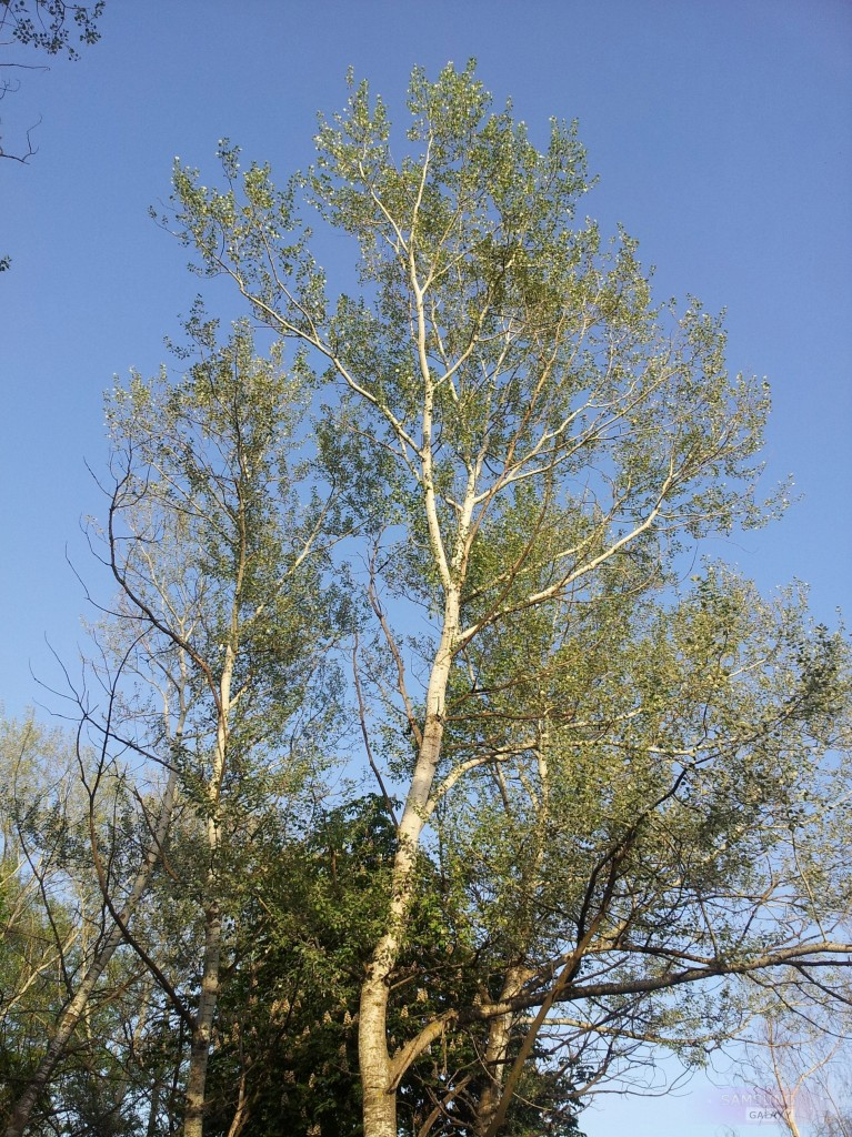 Фото с камеры Галакси Ноут, дерево