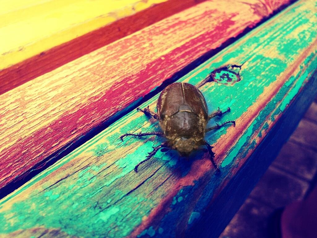 Макросъемка (жук) на Самсунг Галкси Ноте