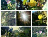 Пример фото из Camera Zoom Fx на Samsung Galaxy S3