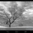Lonely Tree Live Wallpaper – заснеженные пустоши