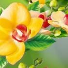 3D Орхидеи – яркие цветы