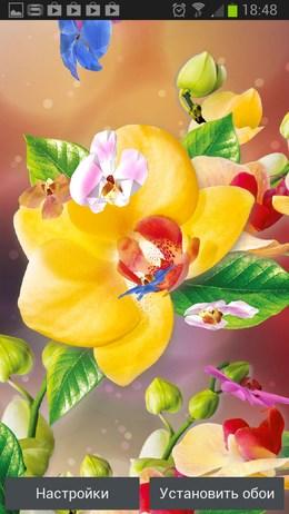 3D Орхидеи – яркие цветы для Android