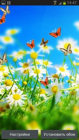 Flowers n Butterflies – ромашковое поле для Android