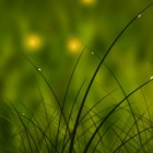 Colorful Summer Meadow – зеленая лужайка