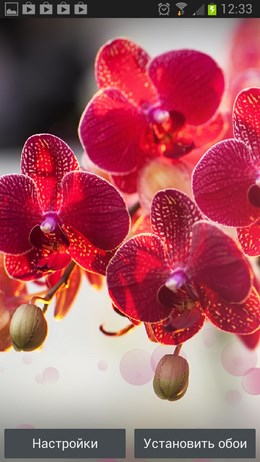 Free Wallpaper Red Orchid – изумительные орхидеи для Android