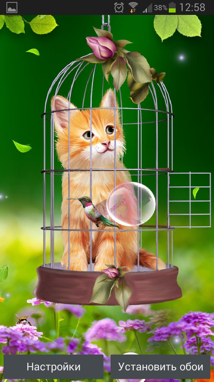 Котенок и Колибри – интересные обои