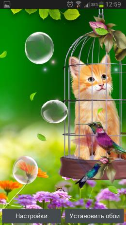 Котенок и Колибри – интересные обои для Android