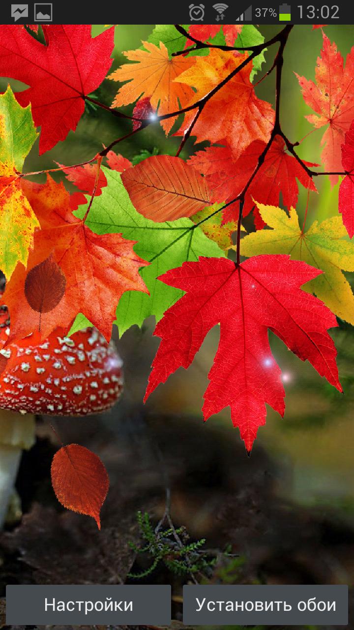 Осенние Живые Обои – красивая пора
