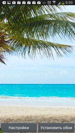 Под веткой пальмы - Beach Wallpaper для Android