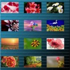 Flowers Wallpapers – HD-обои с цветами