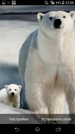 Polar Bear - Super Parallax 3D для Android для Android