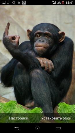 Неприличный жест - Funny Monkey для Android