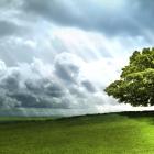 Day Scene HD — одинокое дерево