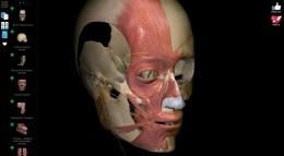 Череп - Anatomy Learning — 3D Atlas для Android