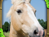 Wild Horse Simulator - иконка