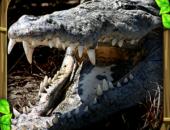 Wildlife Simulator: Crocodile - иконка
