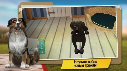 DogHotel lite - дрессура собак